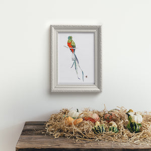 Quetzal - Limited Edition Art Print