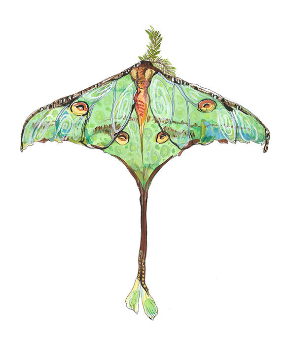 Luna Moth Artwork Print