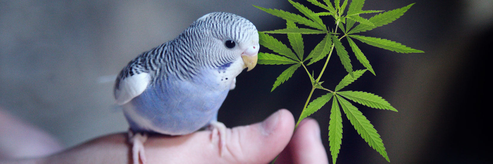 7 Amazing Benefits of CBD For Your Pets