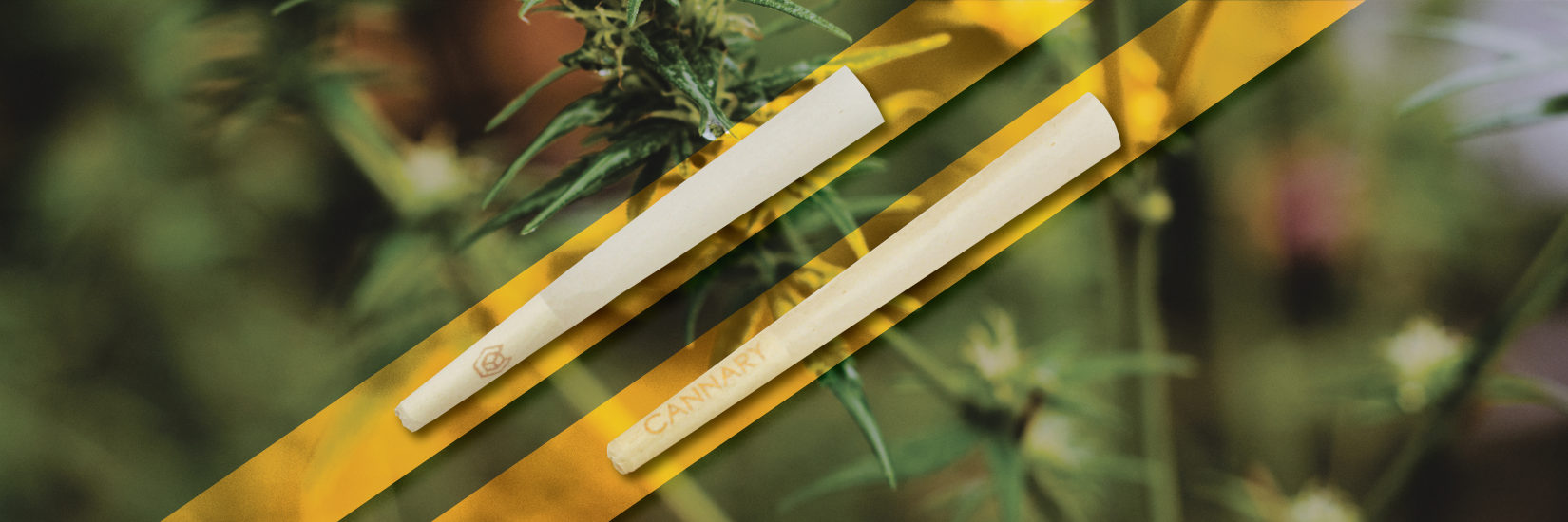 Product Spotlight: Pre-Rolled Cones - Cannacones