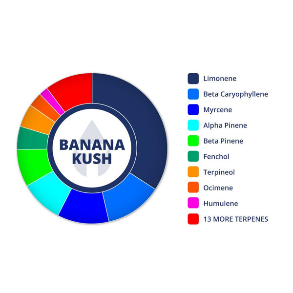 Banana Kush Profile by True Terpenes