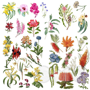 Water Decal - Australian Botanicals