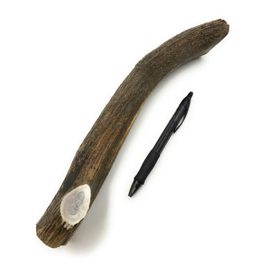 XL Elk Antler Dog Chew