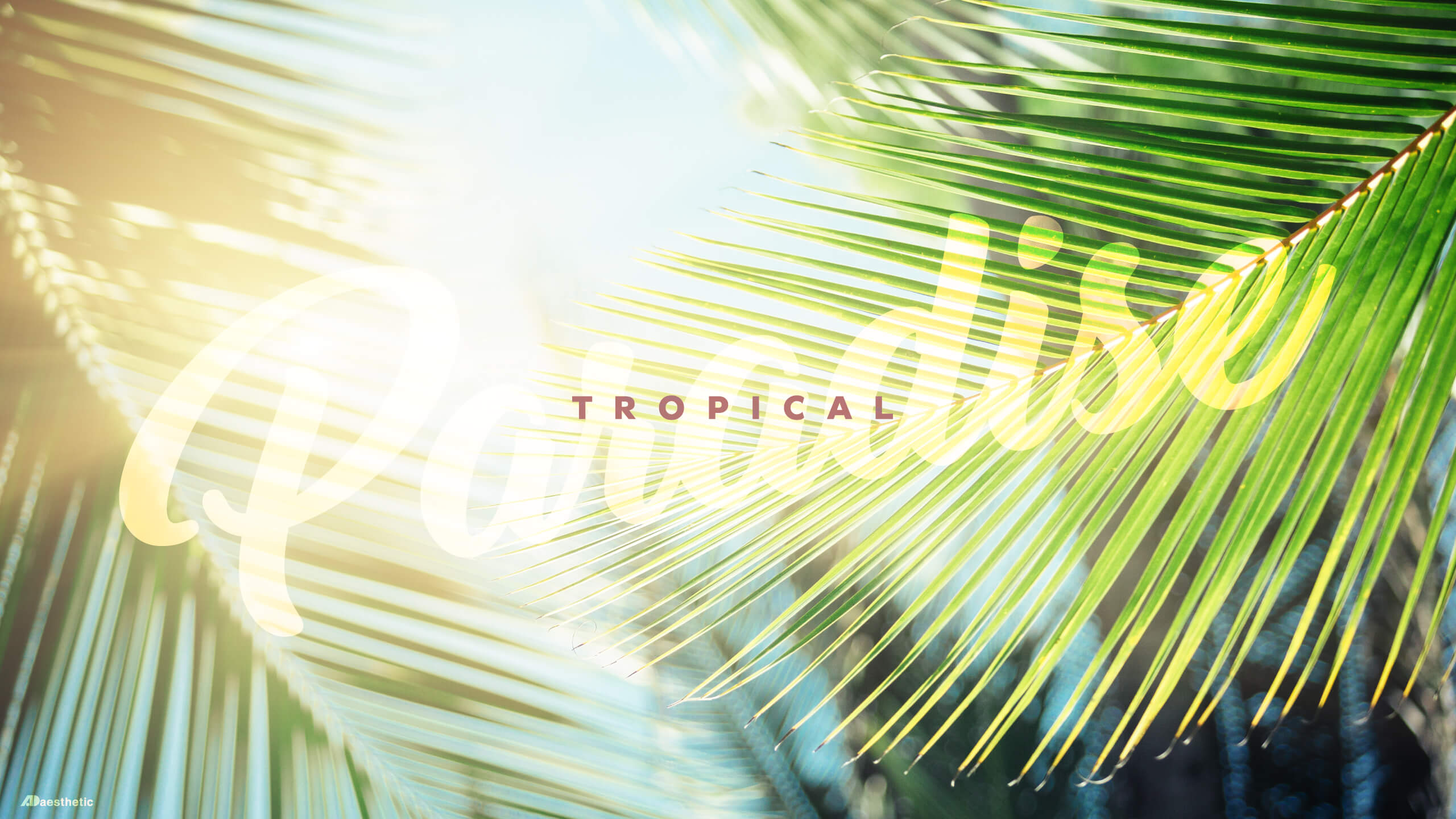 Free Desktop Download Tropical by Ashley AD Aesthetic