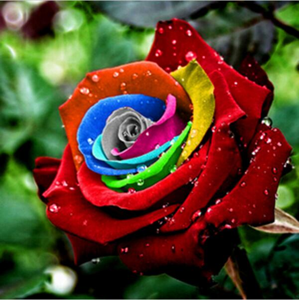 RARE RAINBOW FLOWER SEEDS - exploreyourfashion