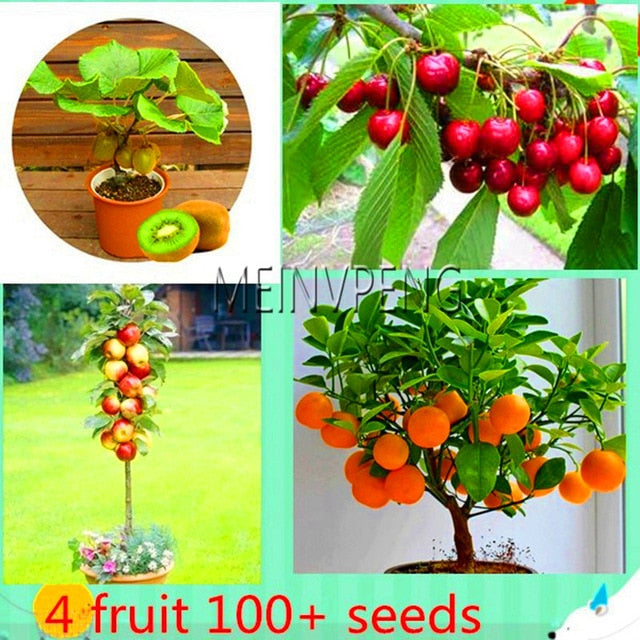 fruit tree bonsai,vegetable and fruit garden plant - exploreyourfashion