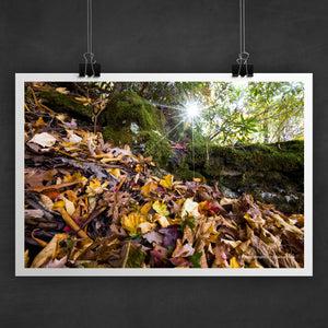 Rabun Bald Photo Art Print