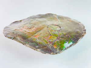Ammolite Art - Tropical Fish