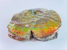 Load image into Gallery viewer, Ammolite Art - Boykosaurus Dino Specimen w/ rainbow colors & mosasaur bites