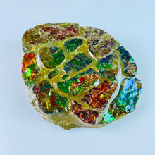 Load image into Gallery viewer, Ammolite - Paperweight