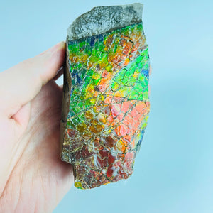 Ammolite - Stained Glass Picture