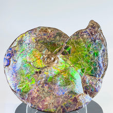 Load image into Gallery viewer, Ammolite Fossil -  Placenticeras Meeki (double sided)