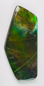 Ammolite Loose Cut Gems