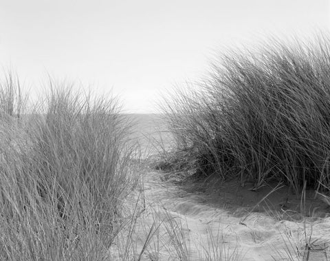 BEACH GRASSES, POINT REYES NATIONAL SEASHORE, CA