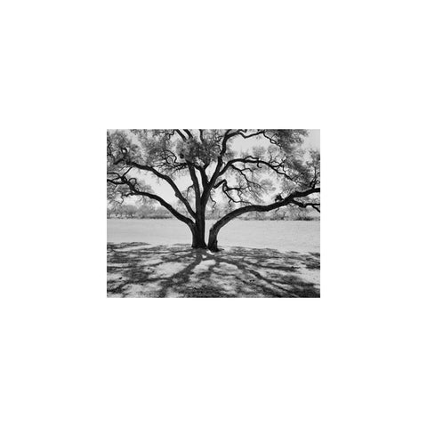 OAK AND SHADOWS, LBJ RANCH, STONEWALL, TEXAS