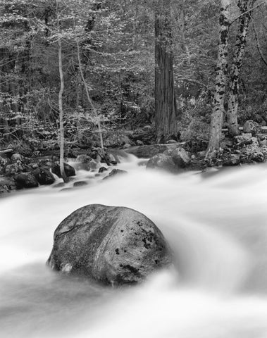 ROCK AND FOREST, MERCED RIVER, YOSEMITE