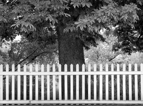 WHITE FENCE AND TREE, CANYON ROAD, SANTA FE, NEW MEXICO