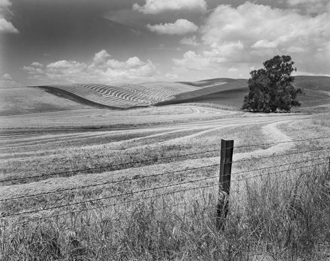 WINDROWED FIELDS AND FENCE, NEAR LIVERMORE, CALIFORNIA