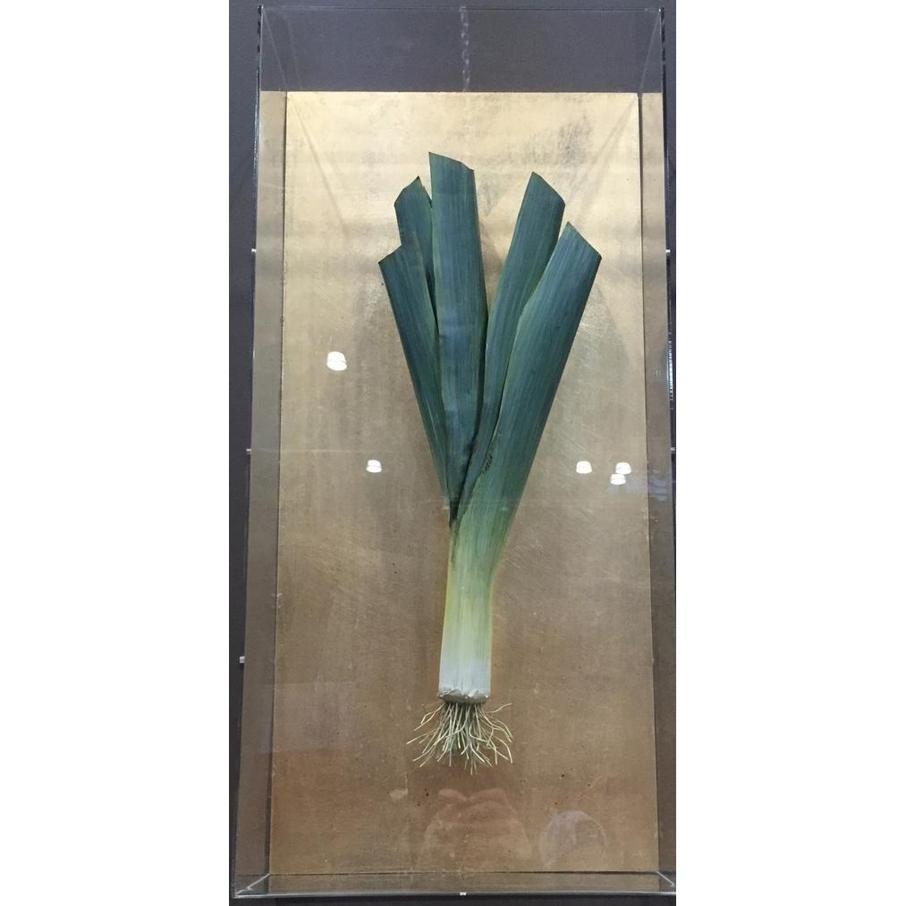 Tommy Mitchell  Vegetable Studies on Gilded Back Leek 000LEK