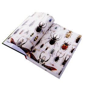 3D Insects Puzzle & Colouring In Book | Game