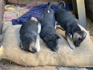 Cosy beds for street dogs