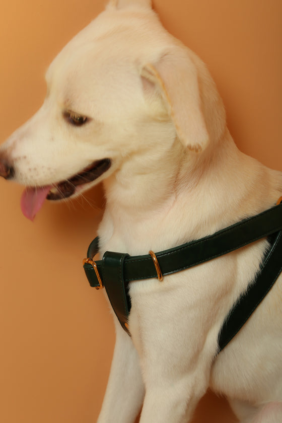 Forest Green Harness