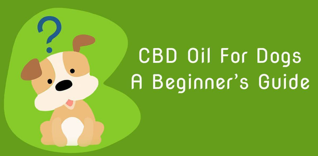 A Beginner's Guide to CBD Hemp Oil for Dogs