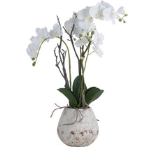 Load image into Gallery viewer, POTTED ORCHID