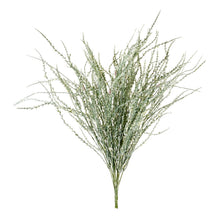 Load image into Gallery viewer, WHEATGRASS BUSH