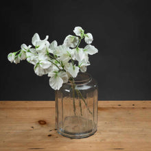 Load image into Gallery viewer, WHITE SWEETPEA SPRAY