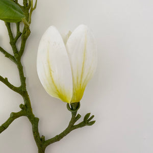 WHITE MAGNOLIA STEM