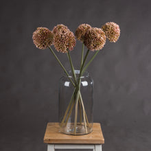 Load image into Gallery viewer, PINK ALLIUM