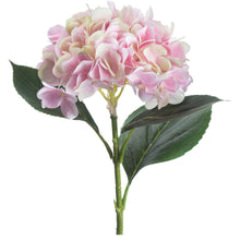 Load image into Gallery viewer, PALE PINK HYDRANGEA