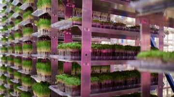 What is sustainable farming..and are microgreens sustainable?