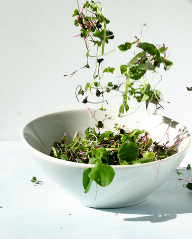 Mixed microgreens in a white bowl