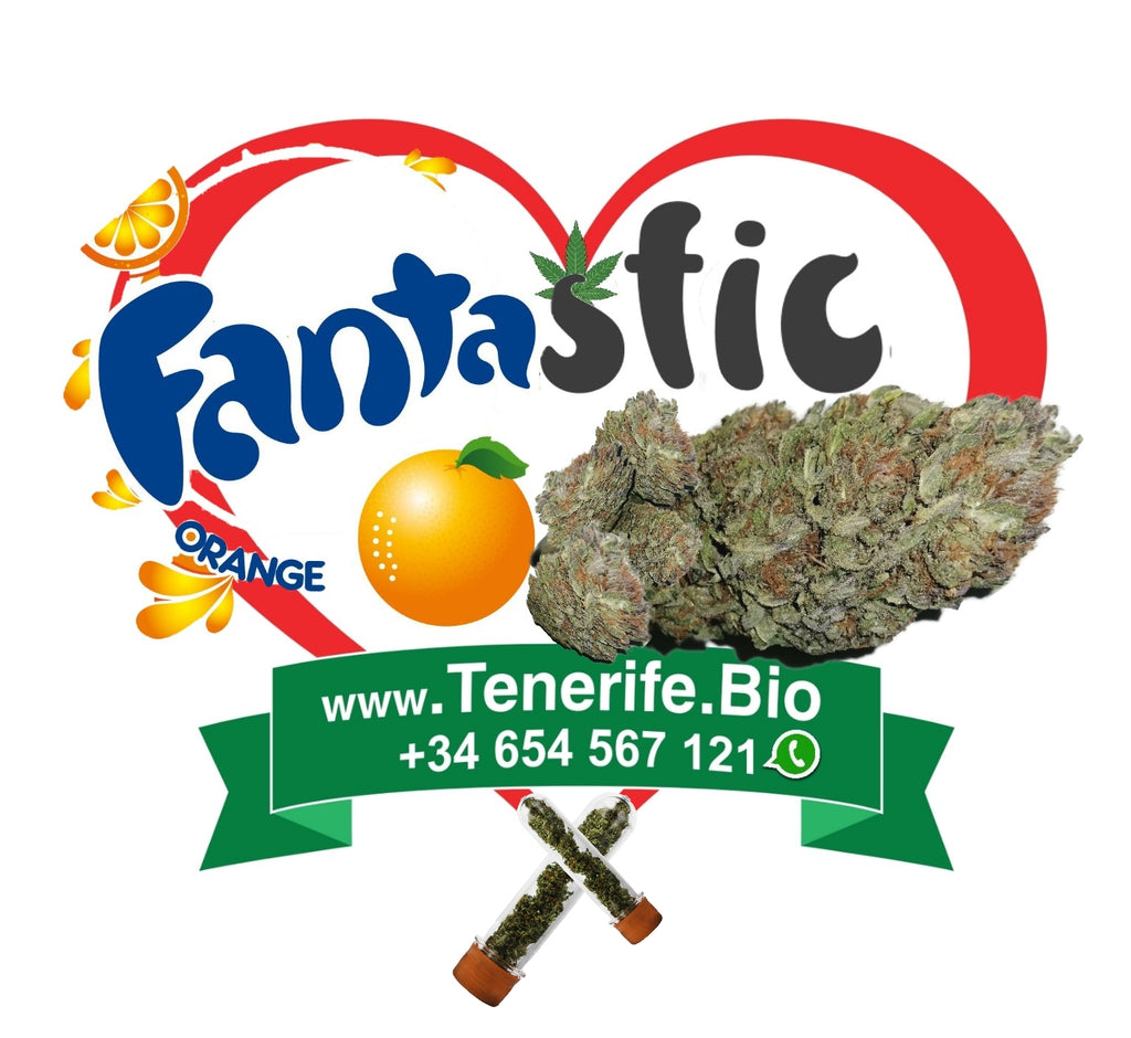 Fanta-stic Orange CBD ♥️