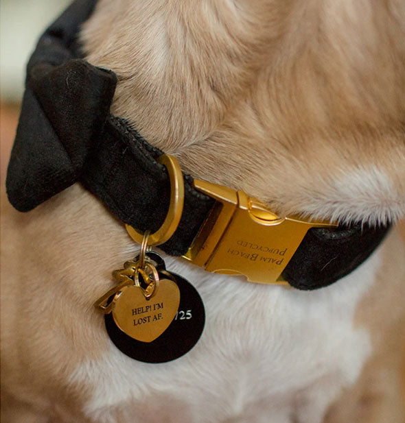 The Help! I'm Lost AF pet tag shown hanging from a dog's collar