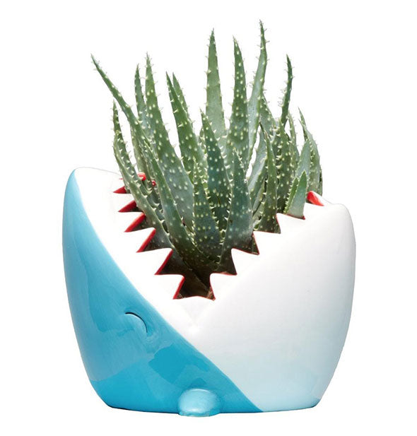 A vase shaped and painted to resemble a shark with mouth open holds a spiny succulent.
