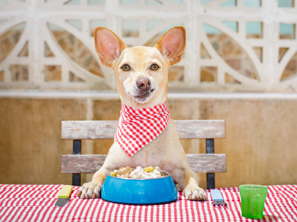 Dog at table. WagWell Box: How long can a dog go without eating.