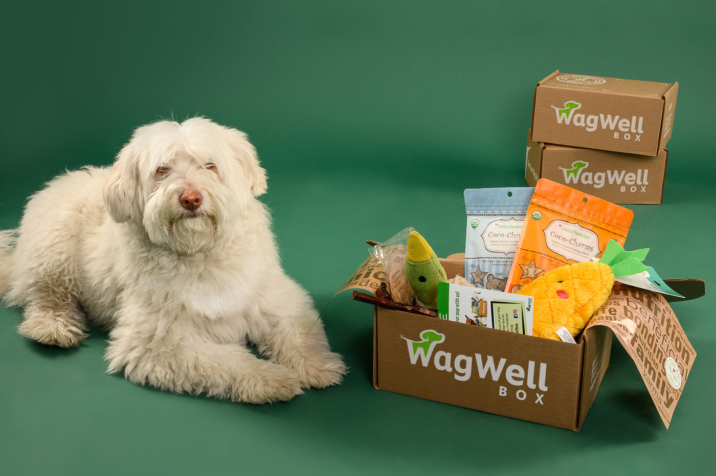 a WagWell monthly dog subscription box