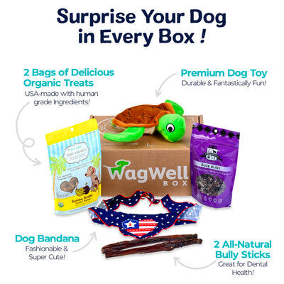 Monthly Dog Box WagWell