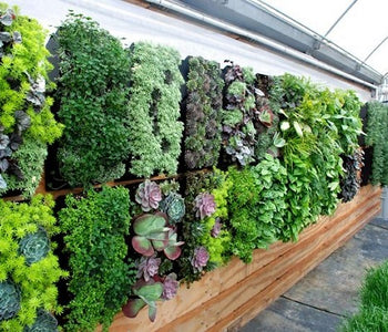 Elegant plants for a vertical garden or living walls