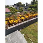 Rooftop Garden Project Per Sqft (Basic Category)