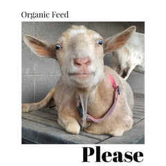 Organic Feed Please