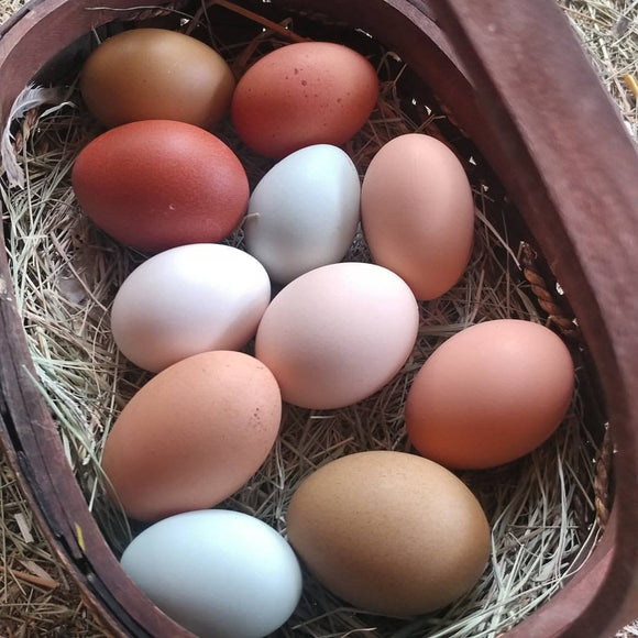 Organic Fed Eggs from Happy Hens