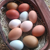 Organic Fed Eggs from Happy Chickens