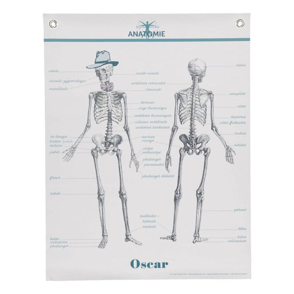 Poster Les Jolies Planches - Anatomy