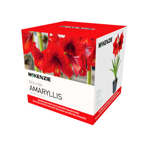 Red Lion Amaryllis Kit