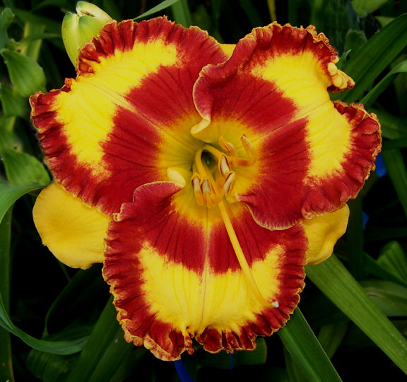Daylily Fashion Rings