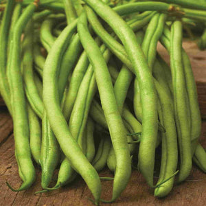 Bright Green Bean Blue Lake (Pole) Vegetables from McKenzie Farms